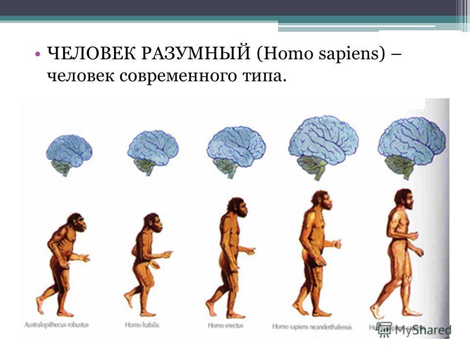 ЧЕЛОВЕК РАЗУМНЫЙ (Homo sapiens) – человек современного типа.