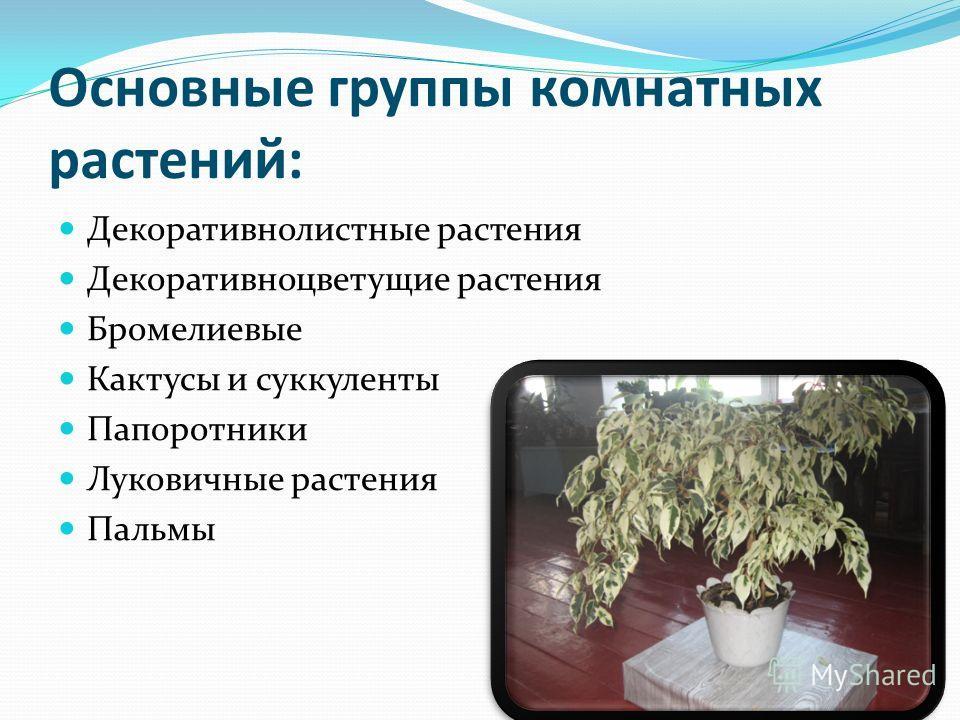 Основные группы комнатных растений: Декоративнолистные растения Декоративноцветущие растения Бромелиевые Кактусы и суккуленты Папоротники Луковичные растения Пальмы