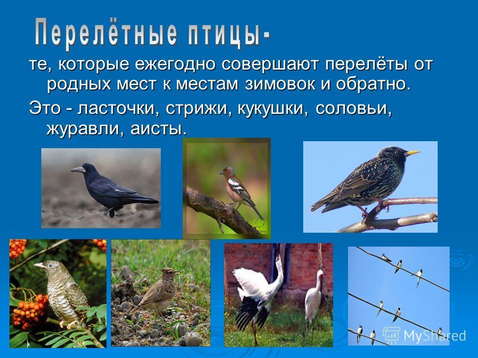 те, которые ежегодно совершают перелёты от родных мест к местам зимовок и обратно. Это - ласточки, стрижи, кукушки, соловьи, журавли, аисты.