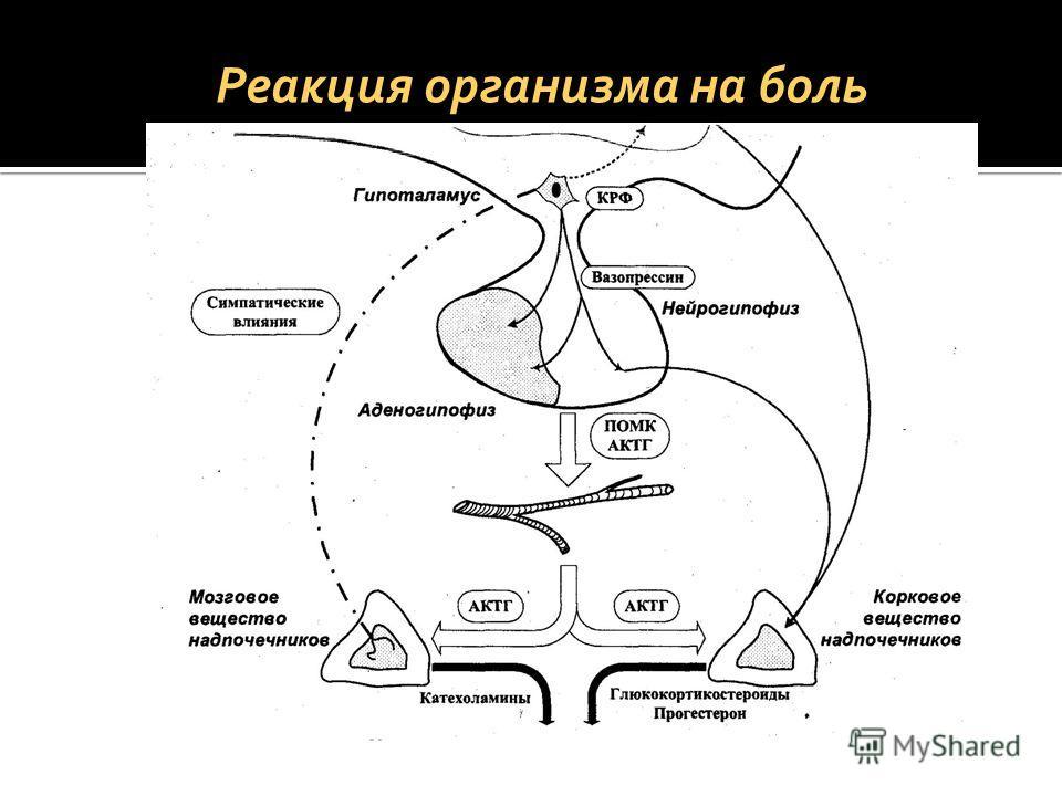 Реакция организма на боль