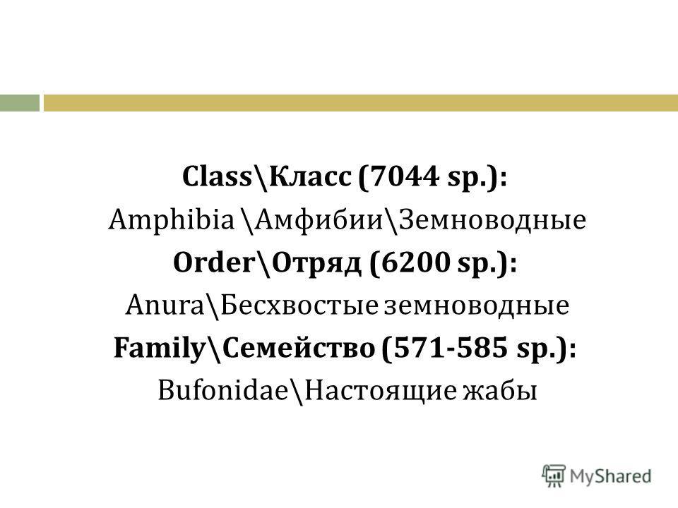 Class\Класс (7044 sp.): Amphibia \Амфибии\Земноводные Order\Отряд (6200 sp.): Anura\Бесхвостые земноводные Family\Семейство (571-585 sp.): Bufonidae\Настоящие жабы