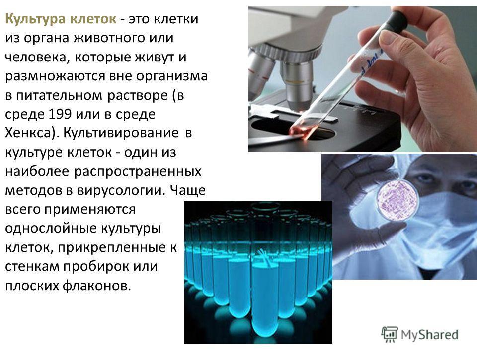 Культура клеток - это клетки из органа животного или человека, которые живут и размножаются вне организма в питательном растворе (в среде 199 или в среде Хенкса). Культивирование в культуре клеток - один из наиболее распространенных методов в вирусол