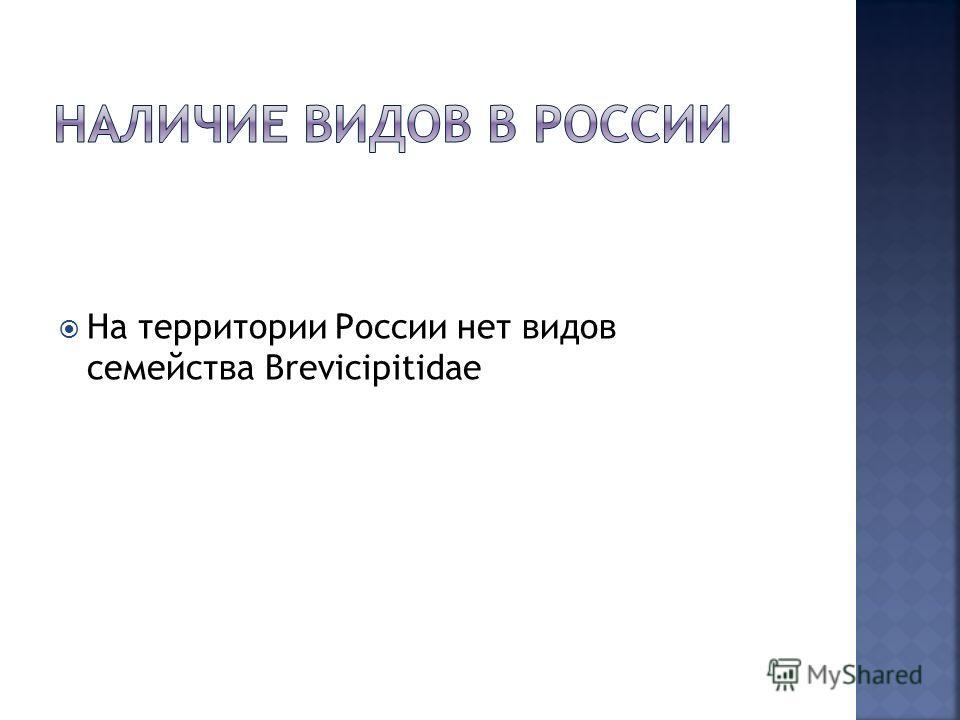 На территории России нет видов семейства Brevicipitidae