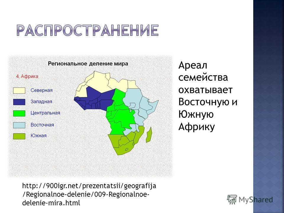Ареал семейства охватывает Восточную и Южную Африку http://900igr.net/prezentatsii/geografija /Regionalnoe-delenie/009-Regionalnoe- delenie-mira.html