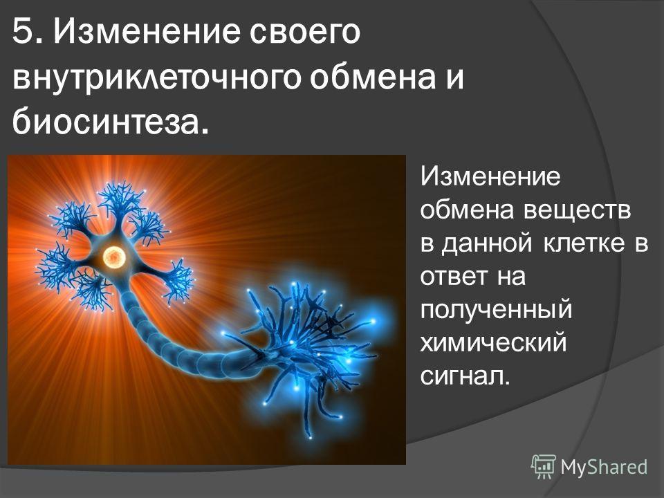 5. Изменение своего внутриклеточного обмена и биосинтеза. Изменение обмена веществ в данной клетке в ответ на полученный химический сигнал.
