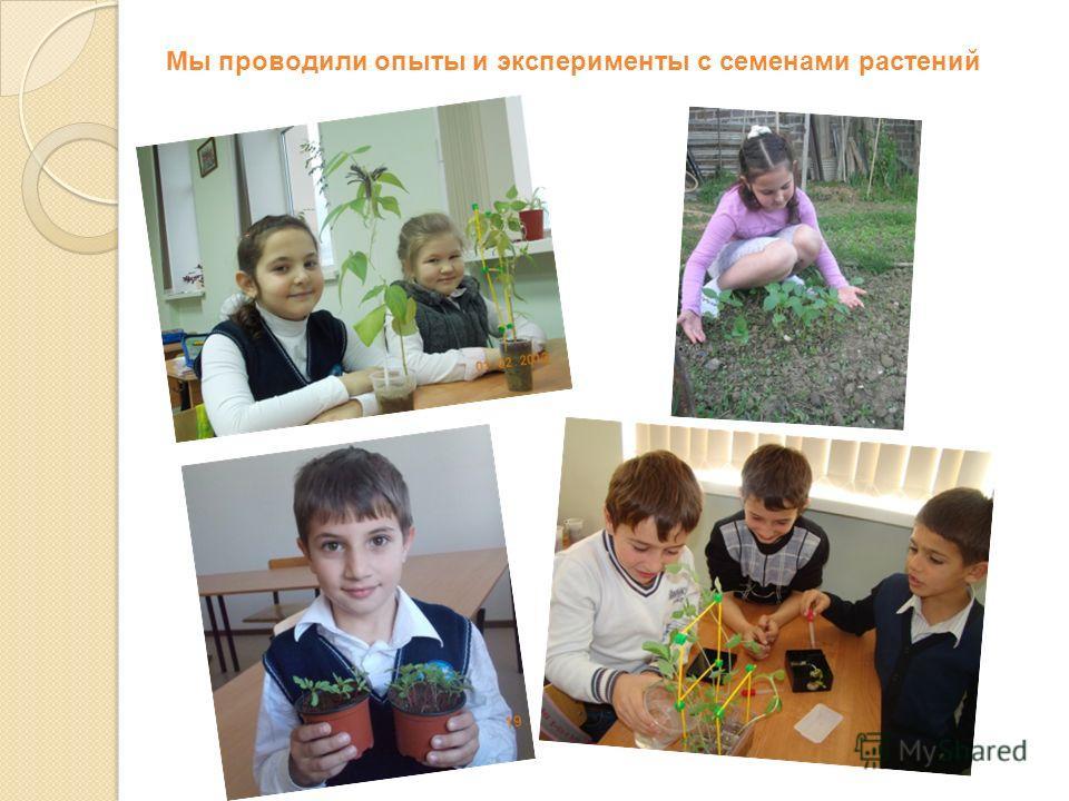 Мы проводили опыты и эксперименты с семенами растений