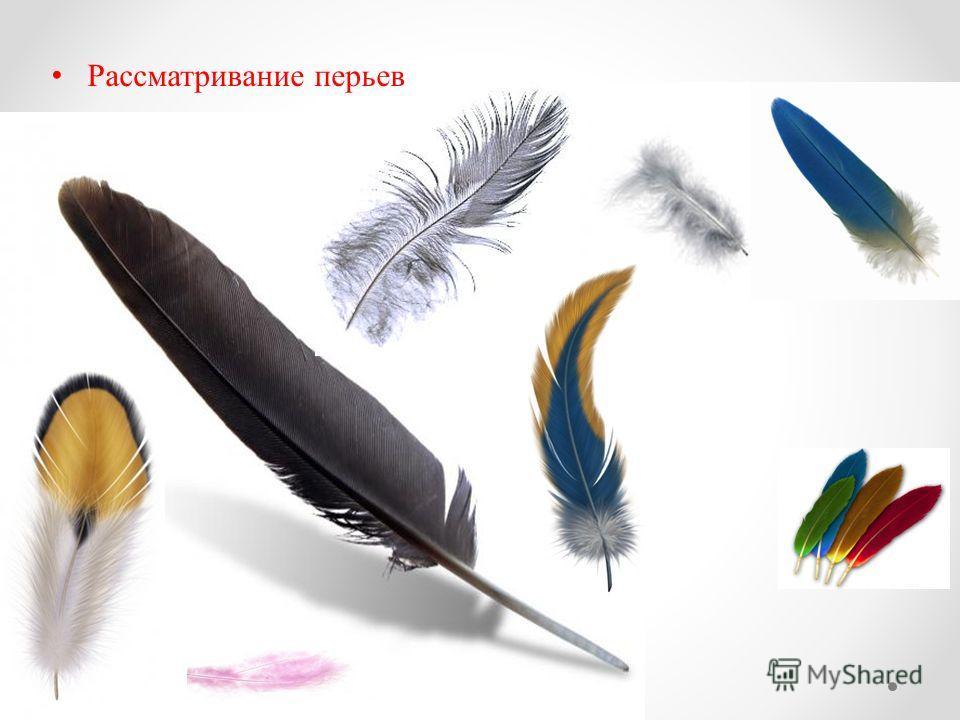 Рассматривание перьев