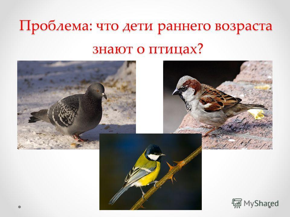 Проблема: что дети раннего возраста знают о птицах?