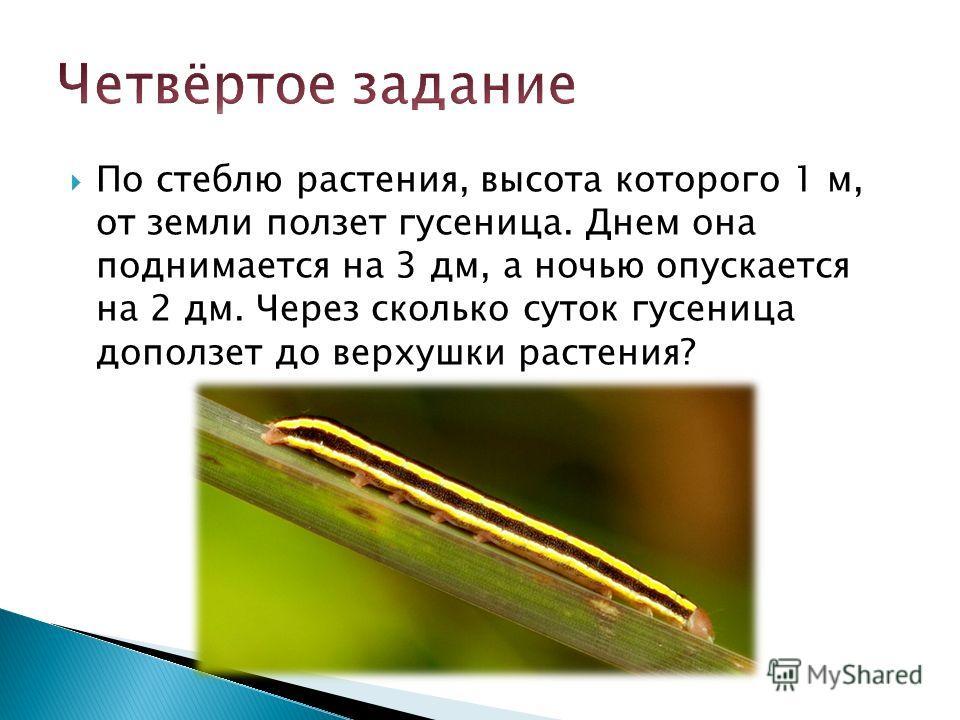 По стеблю растения, высота которого 1 м, от земли ползет гусеница. Днем она поднимается на 3 дм, а ночью опускается на 2 дм. Через сколько суток гусеница доползет до верхушки растения?