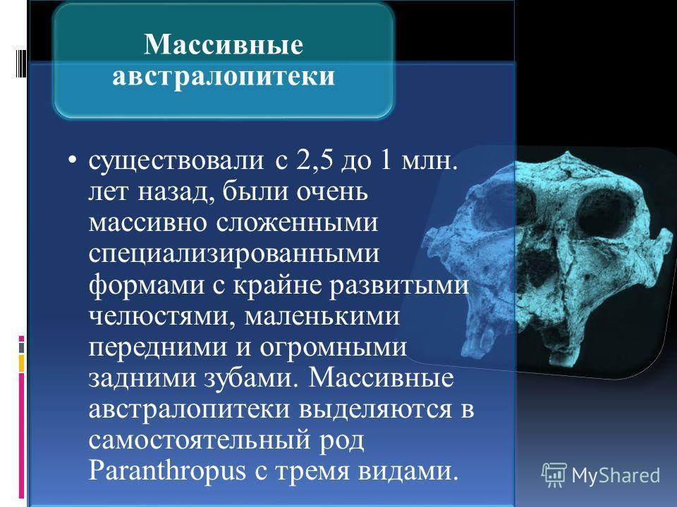 существовали с 2,5 до 1 млн. лет назад, были очень массивно сложенными специализированными формами с крайне развитыми челюстями, маленькими передними и огромными задними зубами. Массивные австралопитеки выделяются в самостоятельный род Paranthropus с
