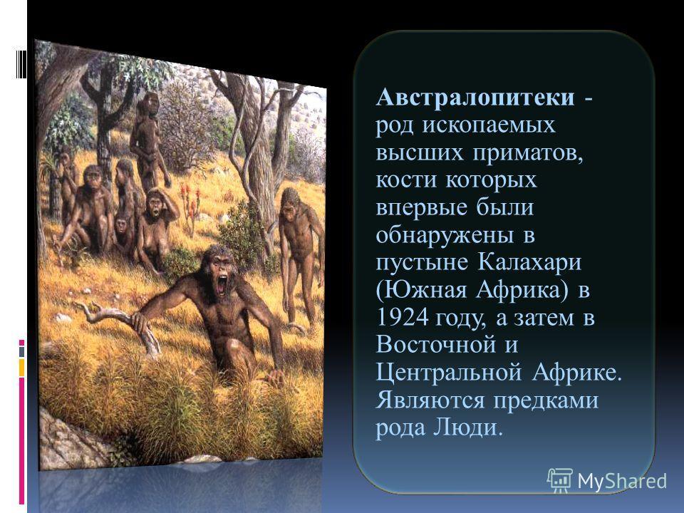 Австралопитеки - род ископаемых высших приматов, кости которых впервые были обнаружены в пустыне Калахари (Южная Африка) в 1924 году, а затем в Восточной и Центральной Африке. Являются предками рода Люди.