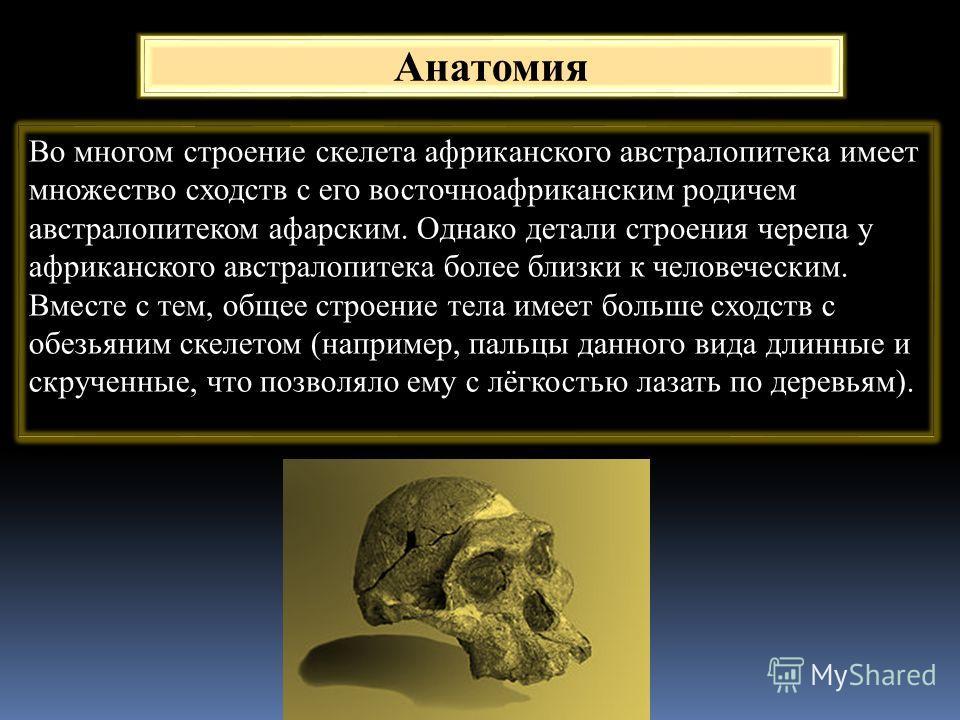 Анатомия Во многом строение скелета африканского австралопитека имеет множество сходств с его восточноафриканским родичем австралопитеком афарским. Однако детали строения черепа у африканского австралопитека более близки к человеческим. Вместе с тем,