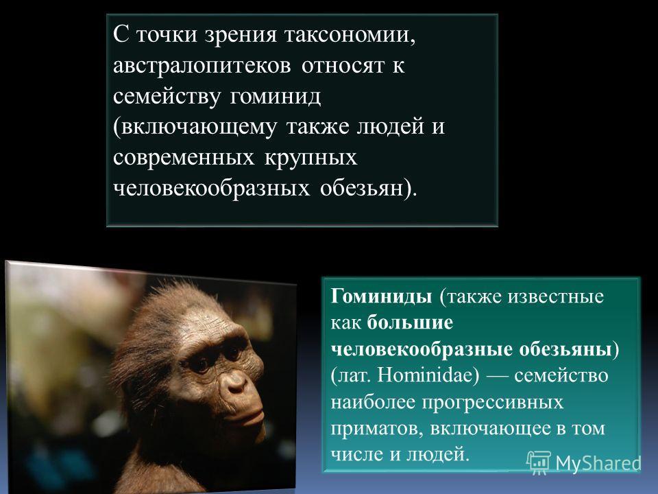 С точки зрения таксономии, австралопитеков относят к семейству гоминид (включающему также людей и современных крупных человекообразных обезьян). Гоминиды (также известные как большие человекообразные обезьяны) (лат. Hominidae) семейство наиболее прог