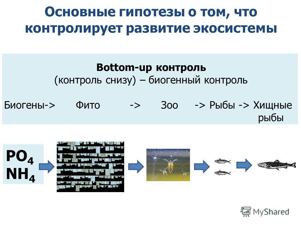 Основные гипотезы о том, что контролирует развитие экосистемы Bottom-up контроль (контроль снизу) – биогенный контроль Биогены-> Фито -> Зоо -> Рыбы -> Хищные рыбы PO 4 NH 4