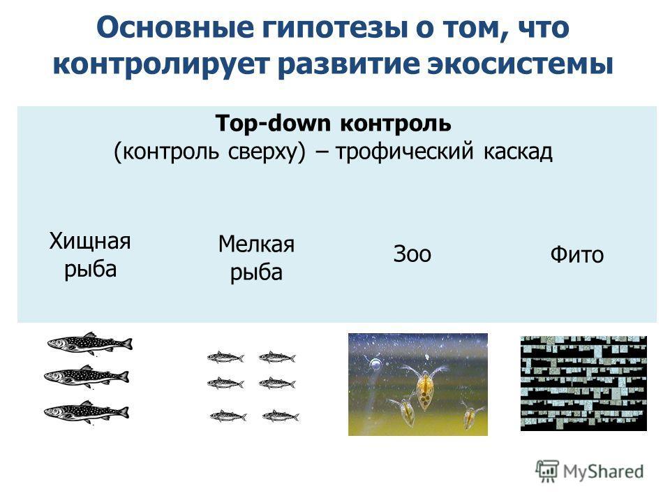 Основные гипотезы о том, что контролирует развитие экосистемы Top-down контроль (контроль сверху) – трофический каскад Фито Зоо Мелкая рыба Хищная рыба