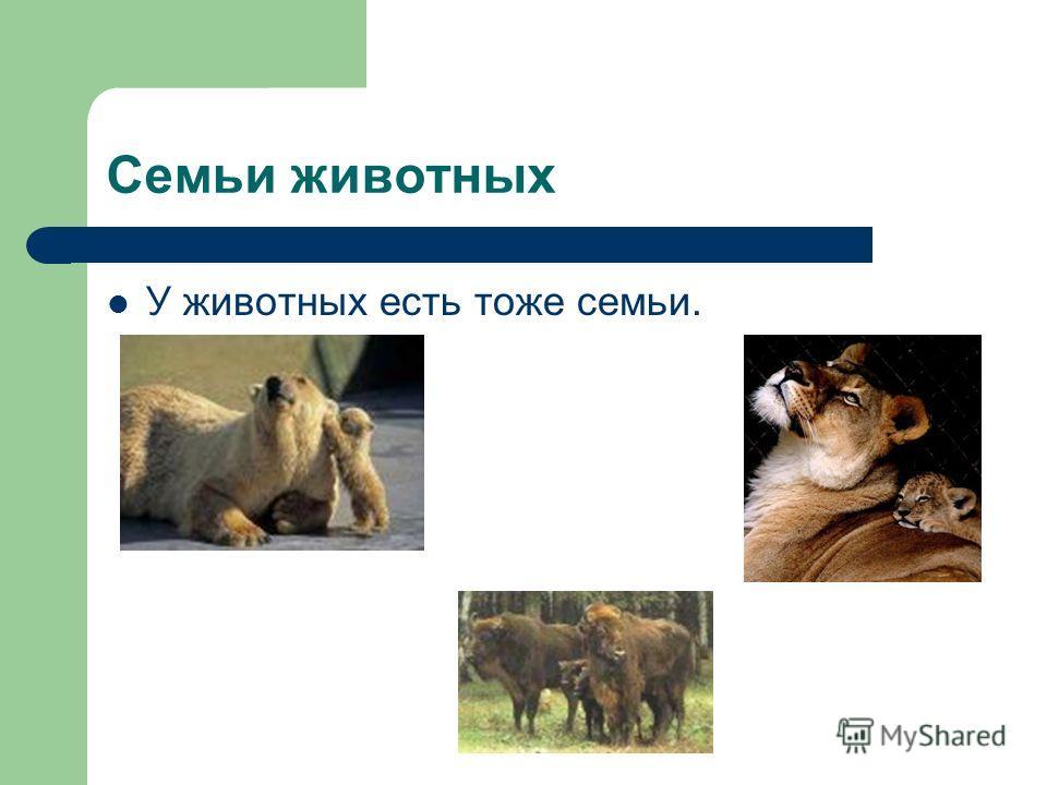 Семьи животных У животных есть тоже семьи.