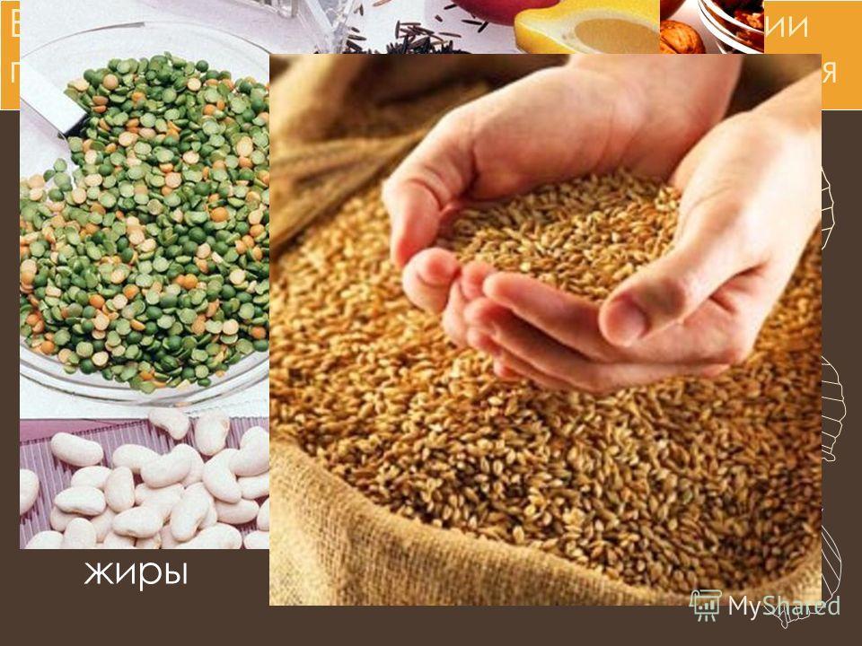 Выводы урока, полученные на основании проведения лабораторного исследования Органы растений содержат воду В состав растений входят минеральные вещества (соли) В растениях есть белки и углеводы В семенах растений есть жиры