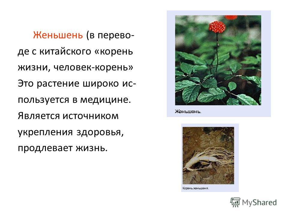 Женьшень (в перево- де с китайского «корень жизни, человек-корень» Это растение широко ис- пользуется в медицине. Является источником укрепления здоровья, продлевает жизнь.