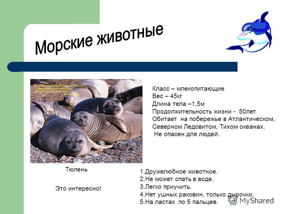 Класс – млекопитающие Вес – 45кг Длина тела –1,5м Продолжительность жизни - 50лет Обитает на побережье в Атлантическом, Северном Ледовитом, Тихом океанах. Не опасен для людей. Тюлень 1.Дружелюбное животное. 2.Не может спать в воде. 3.Легко приучить.