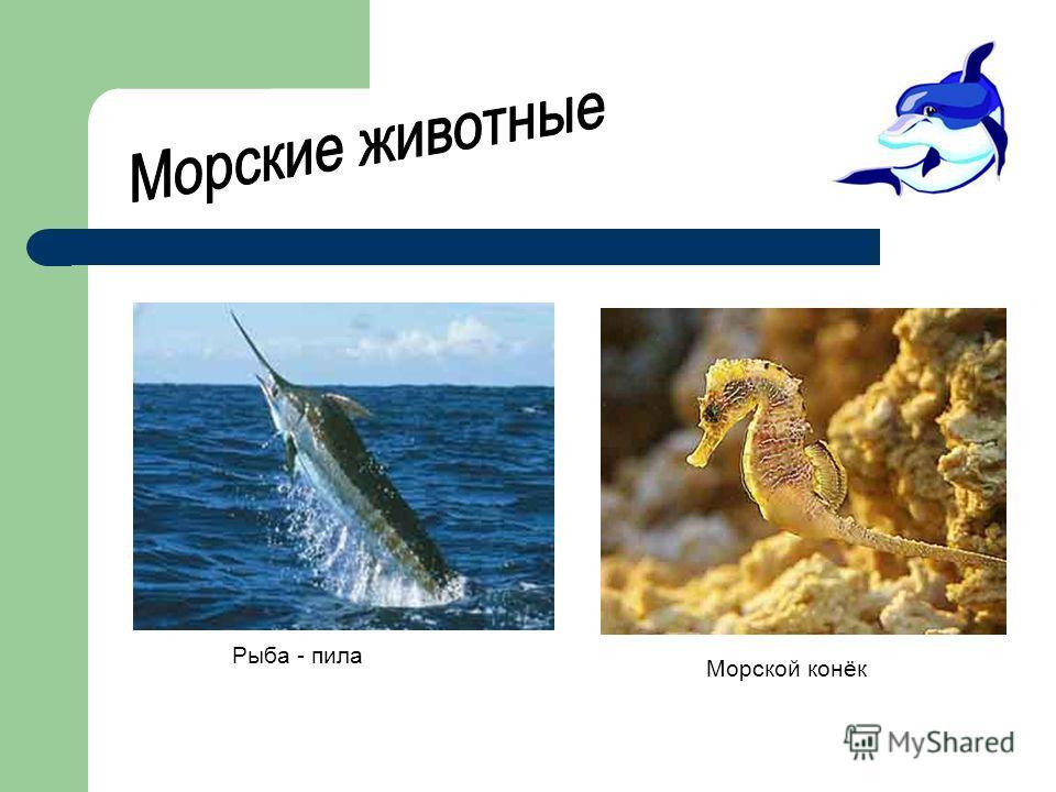 Рыба - пила Морской конёк