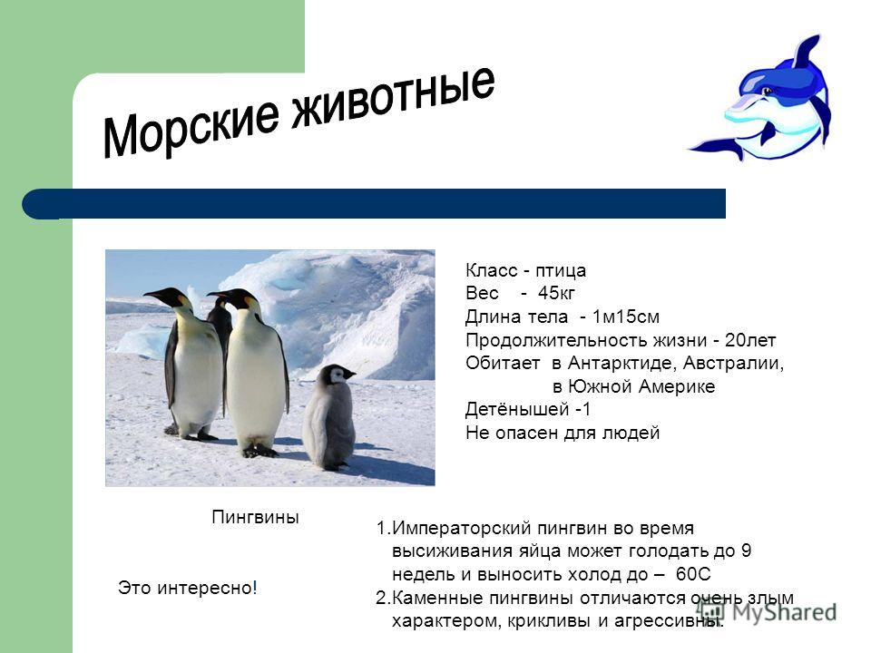 Класс - птица Вес - 45кг Длина тела - 1м15см Продолжительность жизни - 20лет Обитает в Антарктиде, Австралии, в Южной Америке Детёнышей -1 Не опасен для людей Пингвины Это интересно! 1.Императорский пингвин во время высиживания яйца может голодать до