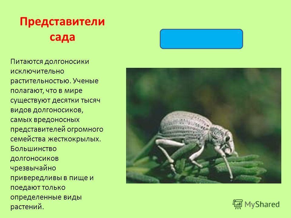 Питаются долгоносики исключительно растительностью. Ученые полагают, что в мире существуют десятки тысяч видов долгоносиков, самых вредоносных представителей огромного семейства жесткокрылых. Большинство долгоносиков чрезвычайно привередливы в пище и