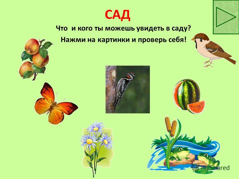 САД Что и кого ты можешь увидеть в саду? Нажми на картинки и проверь себя!