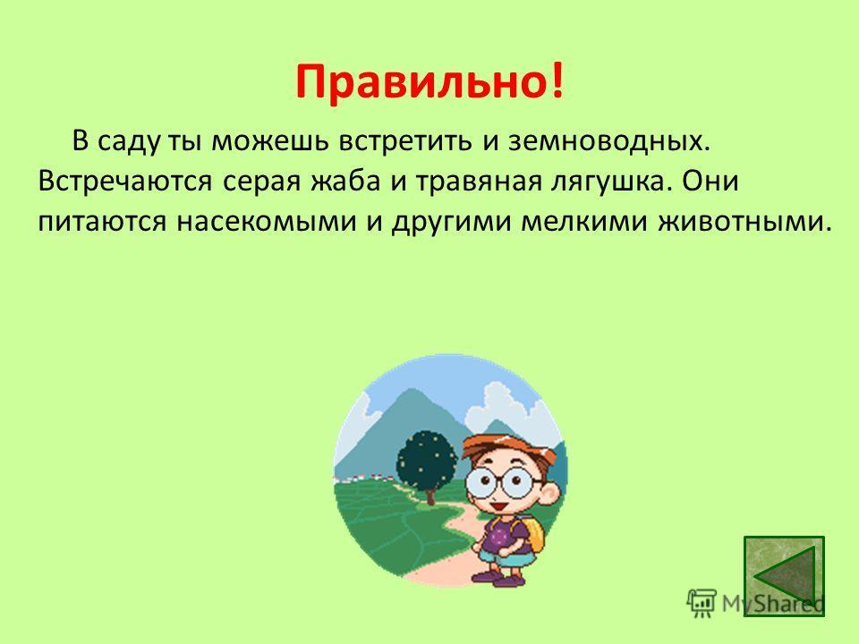 Правильно! В саду ты можешь встретить и земноводных. Встречаются серая жаба и травяная лягушка. Они питаются насекомыми и другими мелкими животными.