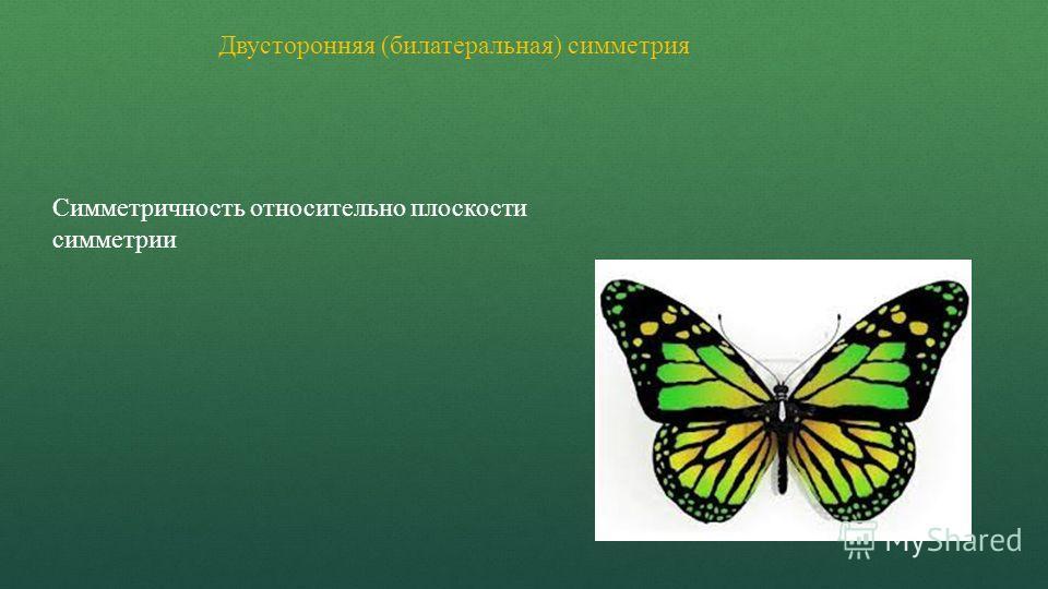 Двусторонняя (билатеральная) симметрия Симметричность относительно плоскости симметрии