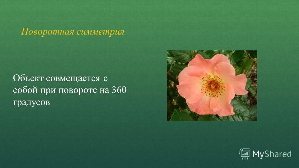 Поворотная симметрия Объект совмещается с собой при повороте на 360 градусов