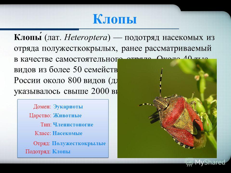 Клопы Клопы́ (лат. Heteroptera) подотряд насекомых из отряда полужесткокрылых, ранее рассматриваемый в качестве самостоятельного отряда. Около 40 тыс. видов из более 50 семейств. На Дальнем Востоке России около 800 видов (для бывшего СССР указывалось