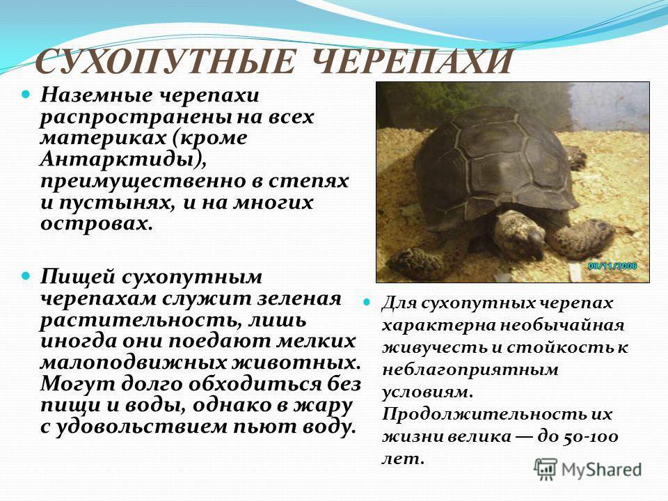 СУХОПУТНЫЕ ЧЕРЕПАХИ Наземные черепахи распространены на всех материках (кроме Антарктиды), преимущественно в степях и пустынях, и на многих островах. Пищей сухопутным черепахам служит зеленая растительность, лишь иногда они поедают мелких малоподвижн