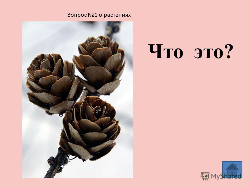 Вопросы о растениях 1 2 34 56