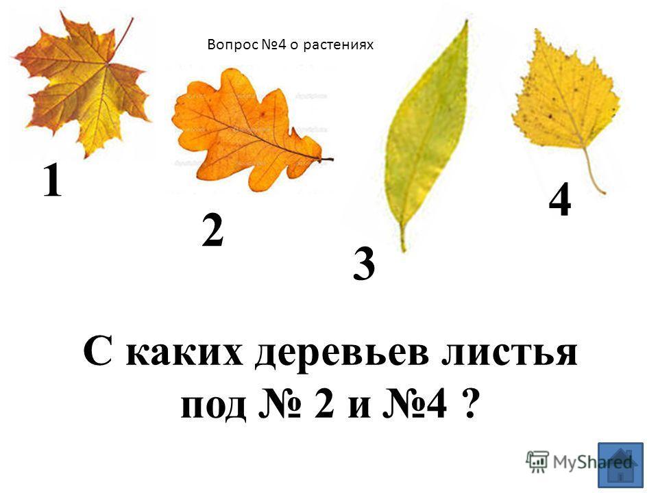 Вопрос 3 о растениях Какую пользу приносят деревья?