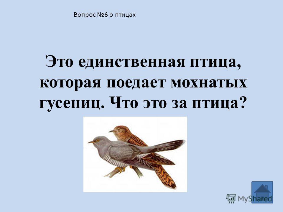 Вопрос 5 о птицах Перечислите насекомоядных птиц