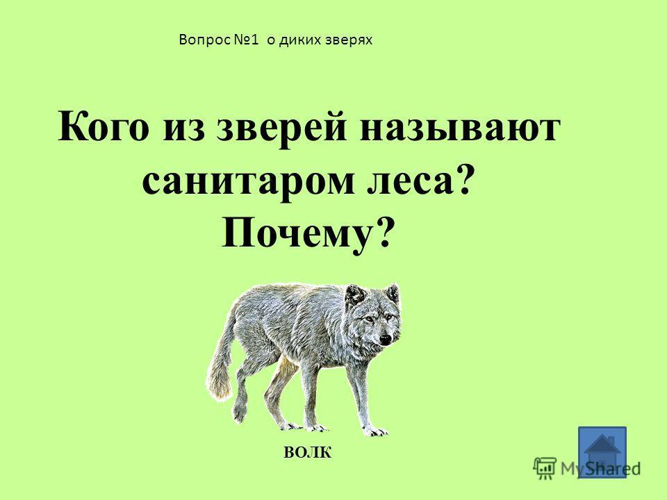 Вопросы о диких зверях 1 2 3 4 5 6