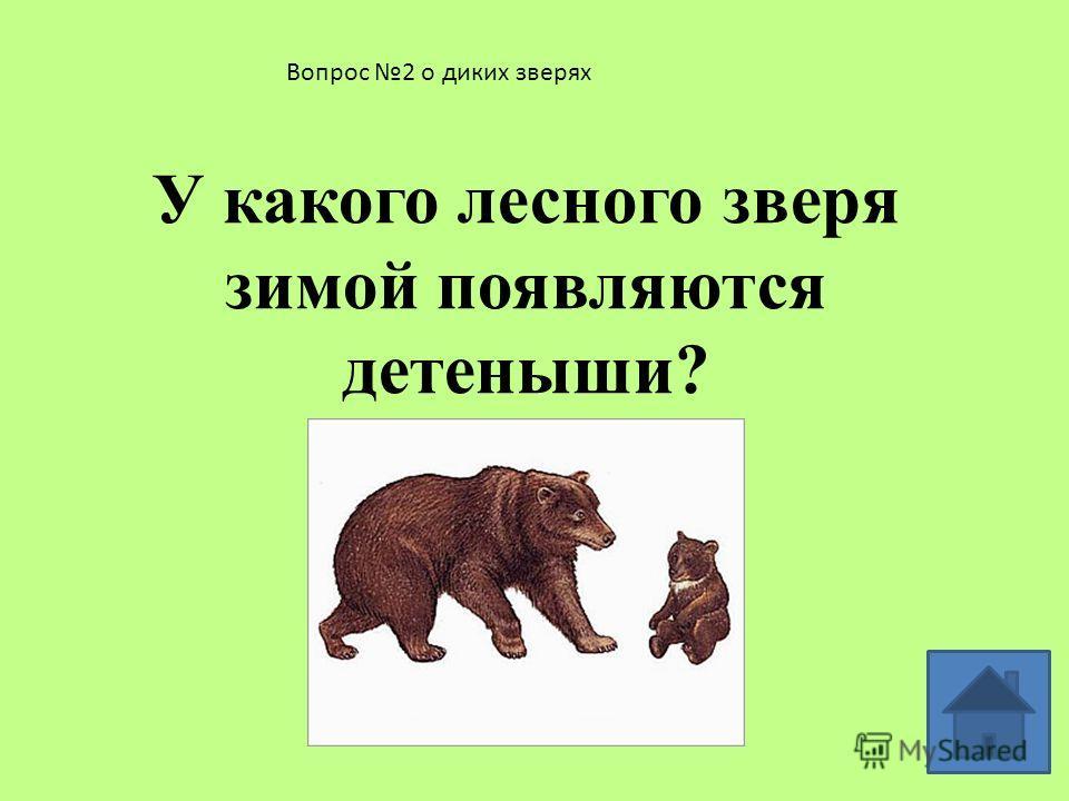 Вопрос 1 о диких зверях Кого из зверей называют санитаром леса? Почему? ВОЛК