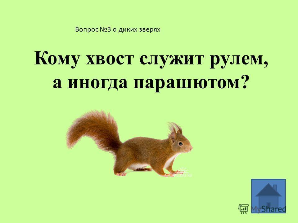 Вопрос 2 о диких зверях У какого лесного зверя зимой появляются детеныши?