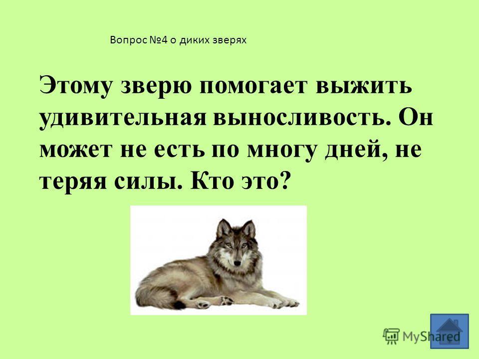 Вопрос 3 о диких зверях Кому хвост служит рулем, а иногда парашютом?