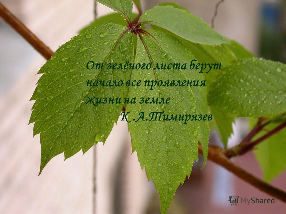 От зелёного листа берут начало все проявления жизни на земле К.А.Тимирязев