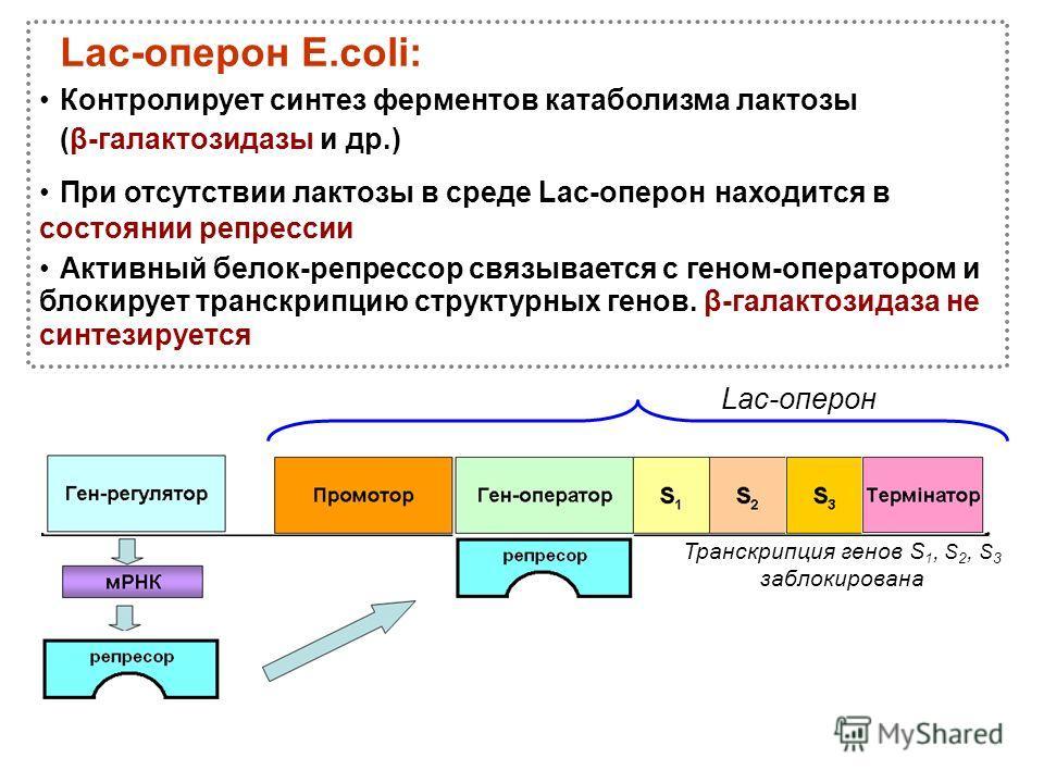 Lac-оперон Транскрипция генов S 1, S 2, S 3 заблокирована Lac-оперон Е.соli: Контролирует синтез ферментов катаболизма лактозы (β-галактозидазы и др.) При отсутствии лактозы в среде Lac-оперон находится в состоянии репрессии Активный белок-репрессор