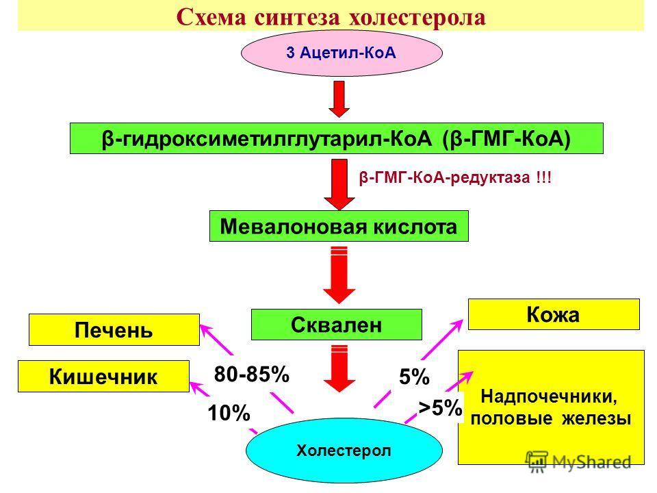 Схема синтеза холестерола Мевалоновая кислота Холестерол β-ГМГ-КоА-редуктаза !!! Сквален β-гидроксиметилглутарил-КоА (β-ГМГ-КоА) 3 Ацетил-КоА Кишечник Печень Кожа Надпочечники, половые железы 80-85% 10% 5% >5%