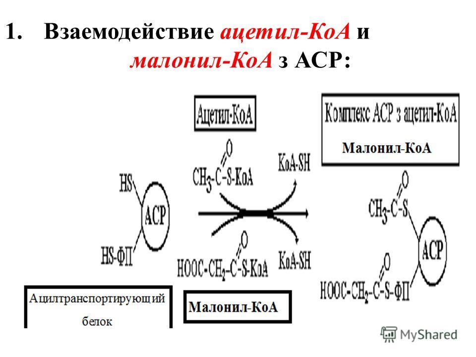 1.Взаемодействие ацетил-КоА и малонил-КоА з АСР: