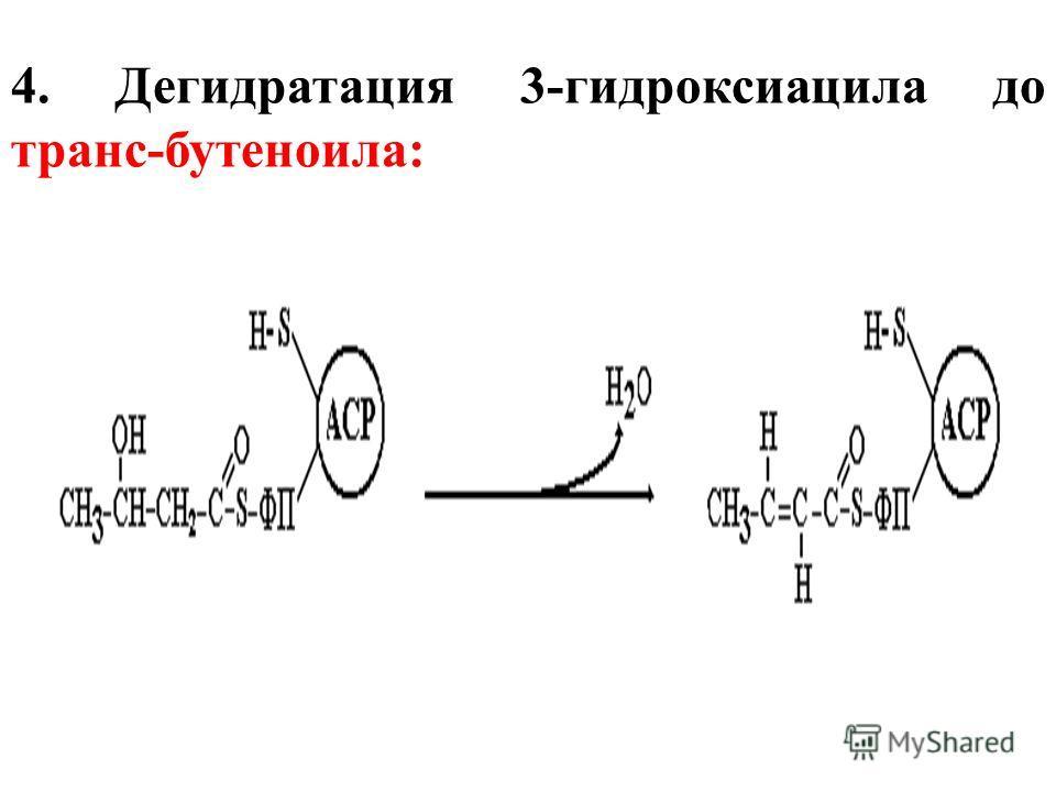 4. Дегидратация 3-гидроксиацила до транс-бутеноила: