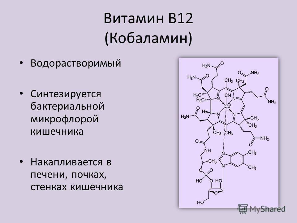 Витамин В12 (Кобаламин) Водорастворимый Синтезируется бактериальной микрофлорой кишечника Накапливается в печени, почках, стенках кишечника