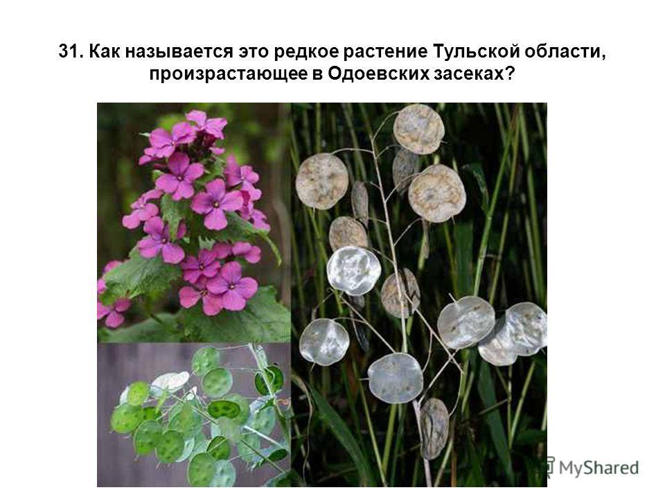 31. Как называется это редкое растение Тульской области, произрастающее в Одоевских засеках?