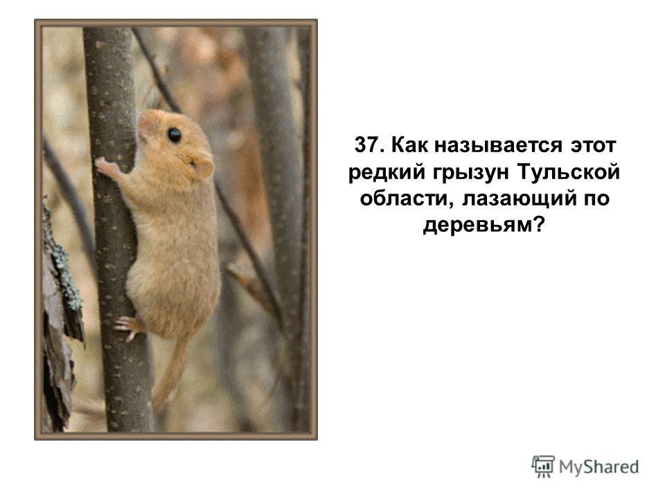 37. Как называется этот редкий грызун Тульской области, лазающий по деревьям?