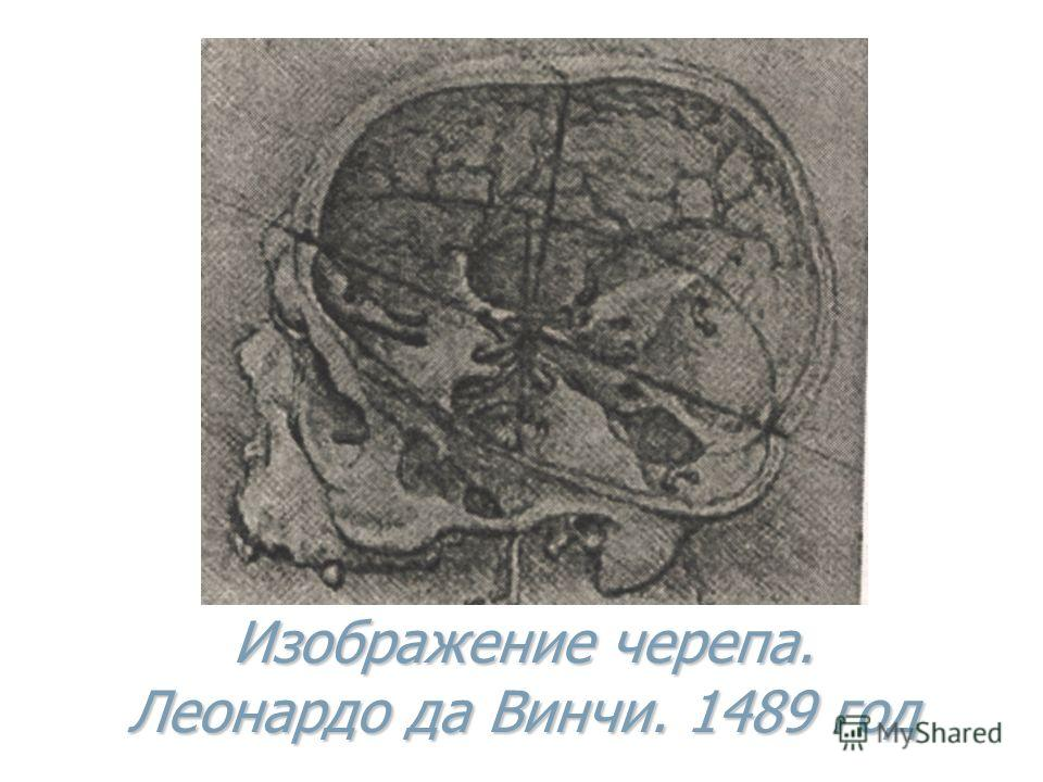 Изображение черепа. Леонардо да Винчи. 1489 год
