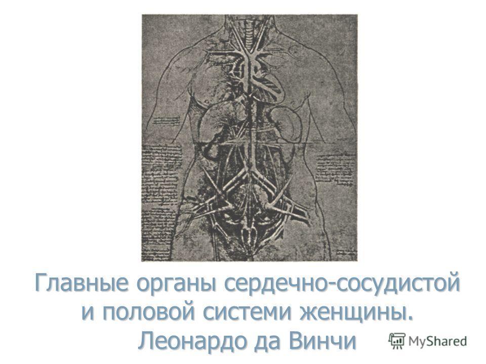 Главные органы сердечно-сосудистой и половой системи женщины. Леонардо да Винчи