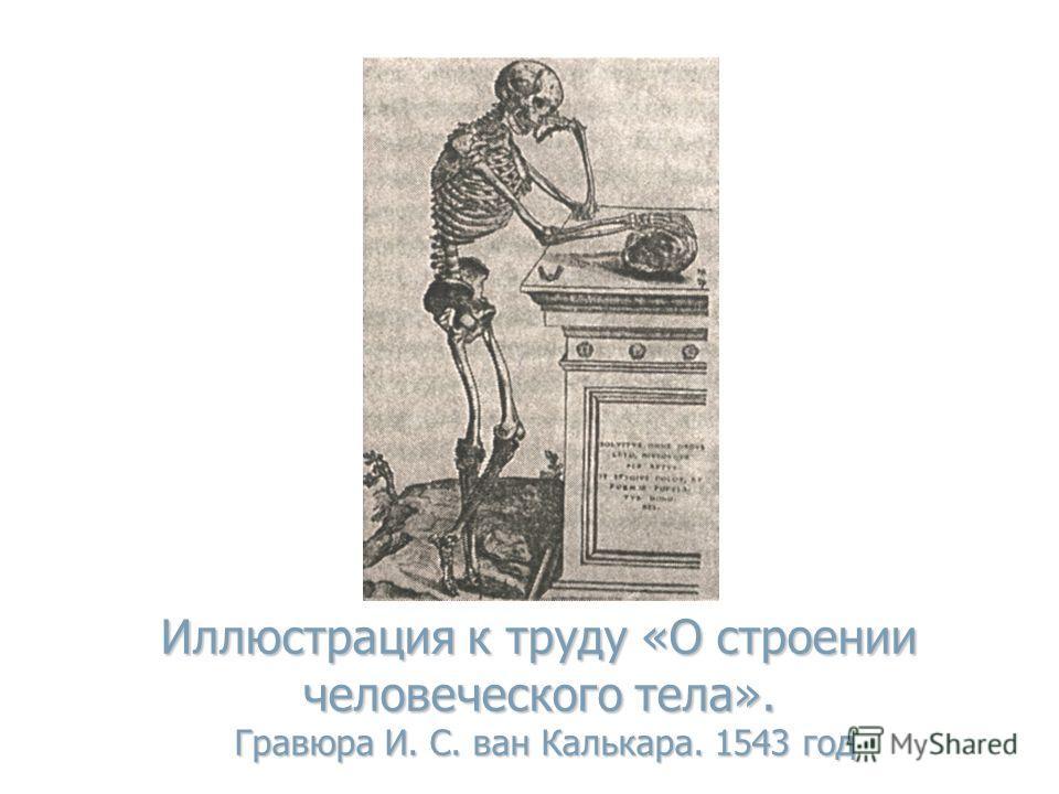 Иллюстрация к труду «О строении человеческого тела». Гравюра И. С. ван Калькара. 1543 год